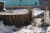 За вырубленные деревья возможно нужно будет платить деньги.