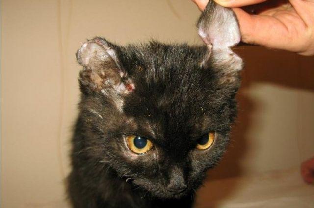 Полиция завела дело на жителя Озерска, истязавшего бездомных котят