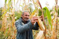 Если направлять приезжих на сельхозработы, например, в Московскую область (да и в другие регионы), довольны будут все.