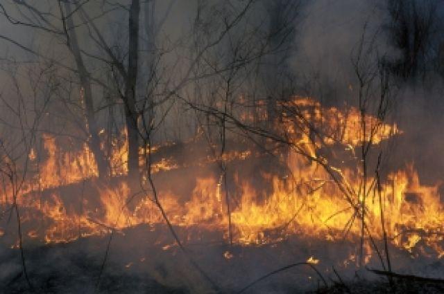 Сезон лесных пожаров, по расчетам Москвы, на Южном Урале начнется в апреле
