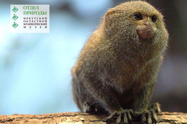 Некоторых животных на выставке можно будет увидеть впервые.