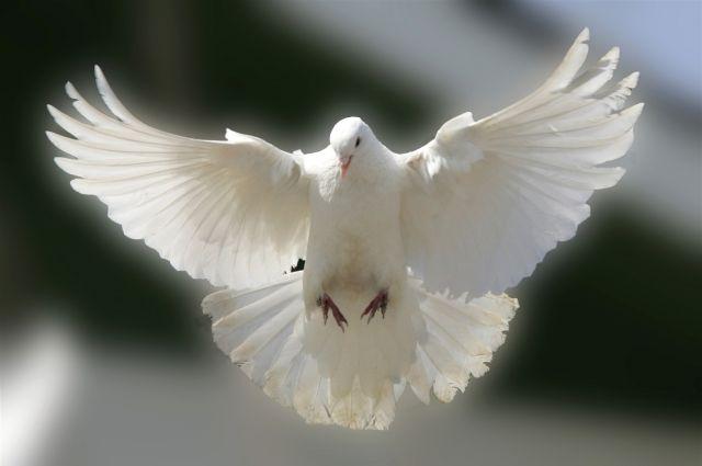 В Екатеринбурге выпустят в небо около 30 белых голубей
