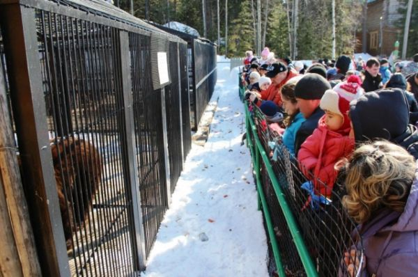 Детишки, которых на празднике было очень много, были в восторге от огромного медведя Степана и других питомцев «Шапшинского урочища».