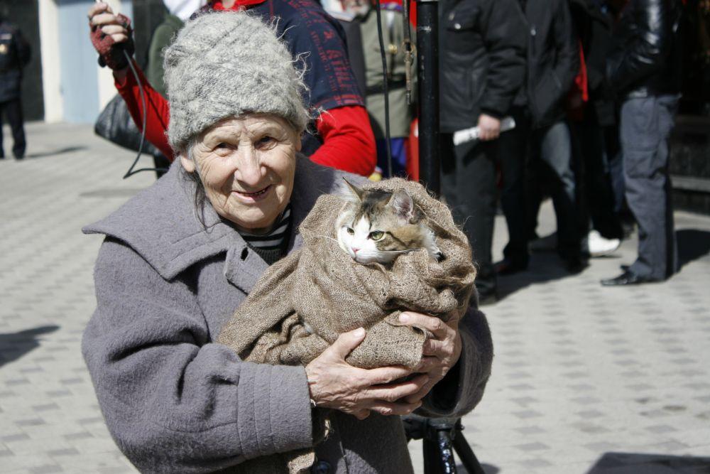 Против никеля выступили даже воронежские коты