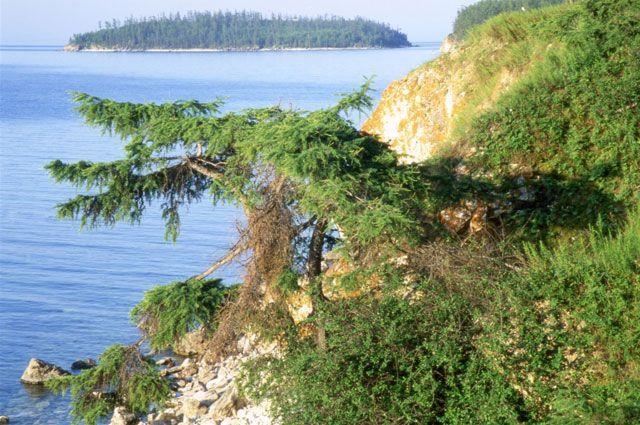 Растения возле Байкала могут быть опасными.