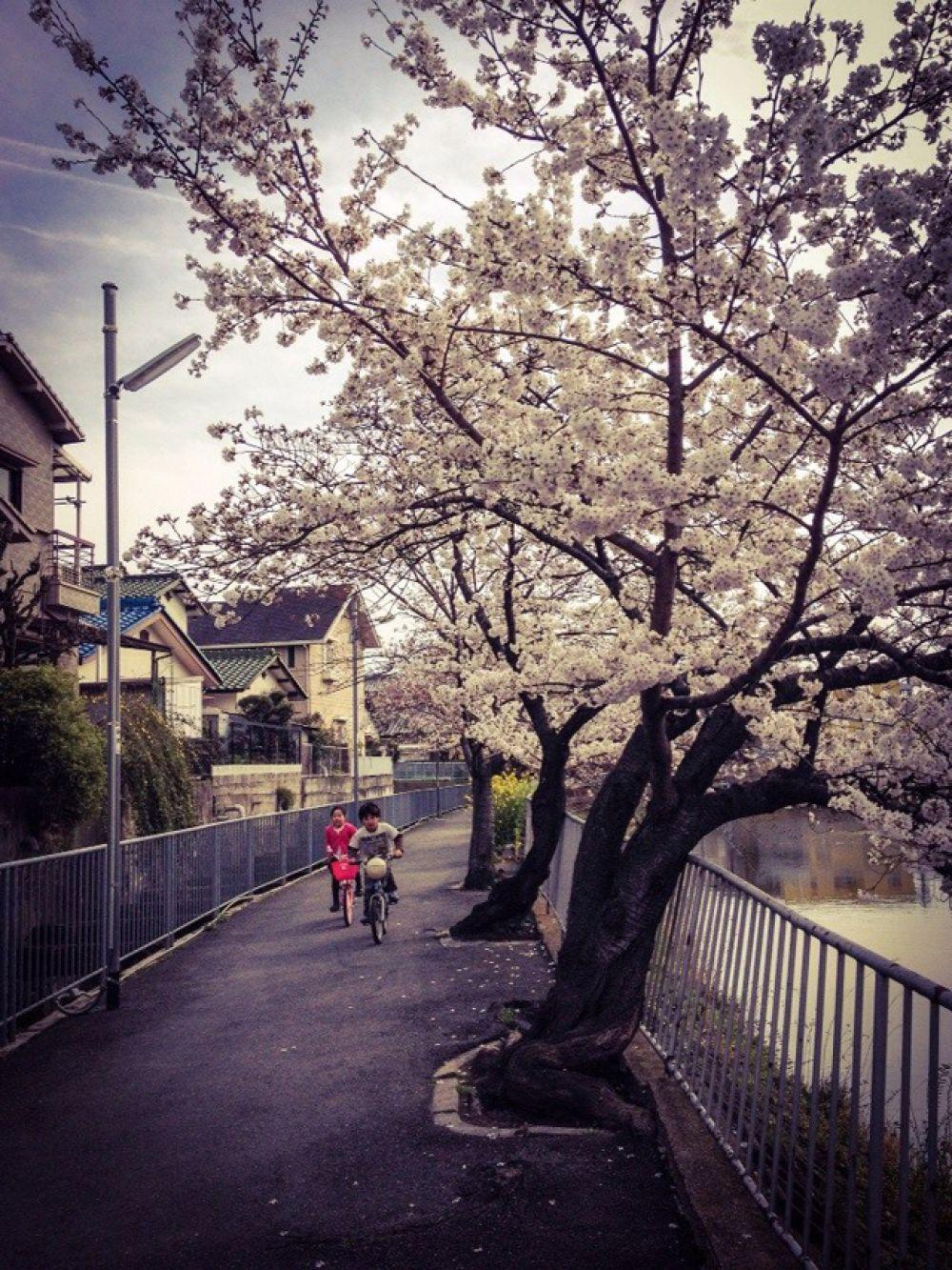 Весенние прогулки детей в тихом городке Такацуки.