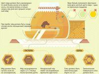 6 основных правил хранения меда, Продукты и напитки, Кухня, Аргументы и Факты
