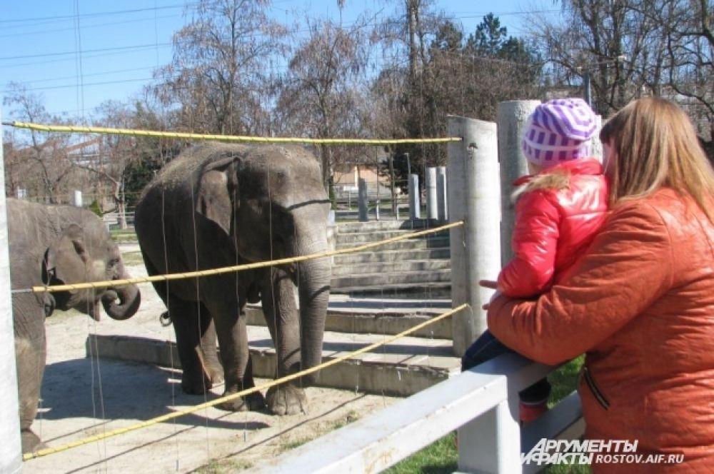 Азиатские слоны Ситара и Синта (мама и дочь) никого не оставляют равнодушными.