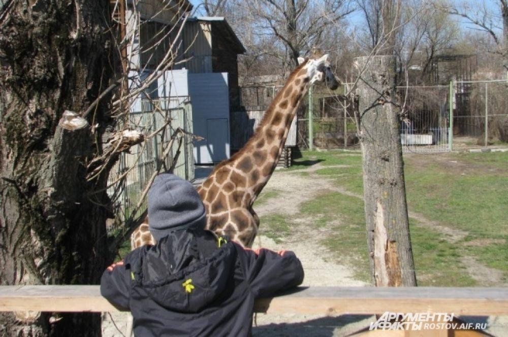 Жирафиха Елизара -самое грациозное существо в зоопарке.
