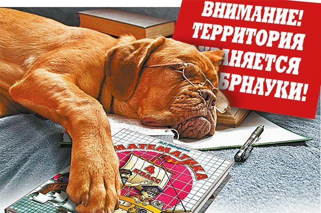 Коллаж Андрея Дорофеева.