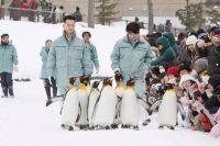 «Зоопарк Асахияма: Пингвины в небе». 2009 год.