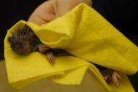 Пока люди не научатся соблюдать чистоту, полчища крыс будут неистребимы.