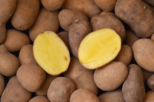 Картофель без гнильцы.