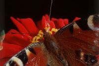 Экспозиция дополнена макроснимками насекомых в естественной среде.