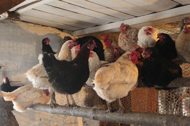 Среднеуральскую птицефабрику может спасти продажа земельных участков