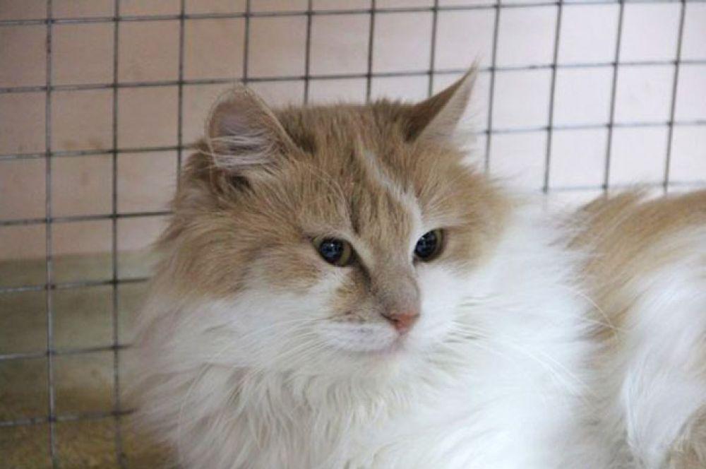 Матильда – кошка Фрекен Бок ищет свою домомучительницу! Звоните 8-928-316-39-65 Валентина