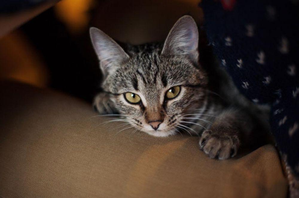 Маря – ласковая, ручная, дружелюбная кошка. Тел. 8 928 325 19 02 Анастасия Новикова