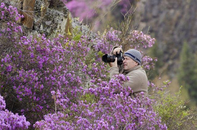 Фотограф Алексей Эбель в зарослях маральника.