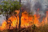 Пожар в лесу - беда и для людей, и для зверей.