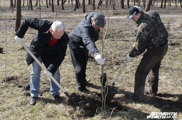 Александр Прокопук и Евгений Авилов за посадкой деревьев.