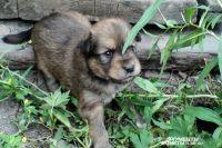 В Омске на дороге сбили щенка.