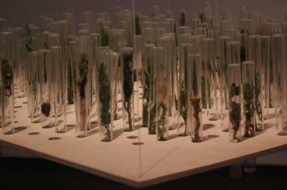 Директор Фонда современного искусства «Сибирь» Анна Терешкова обратила внимание на то, что в России мероприятие подобного масштаба, посвященное  science-art, проводится впервые.