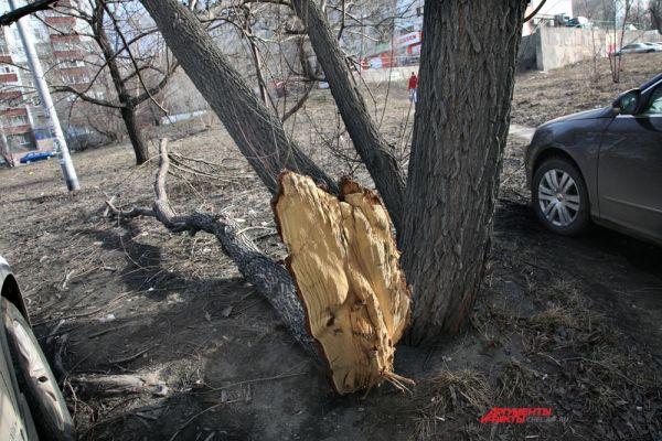 Фотокорреспондент АиФ-Челябинск запечатлел на камеру последствия зимы в областном центре. Улица Российская,67