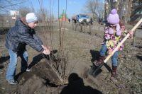 В Омске организовано по 2 пункта выдачи саженцев в каждом административном округе.