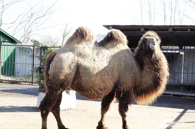 В настоящее время в Ивановском зоопарке около тысячи экземпляров животных, всего более 180 видов.