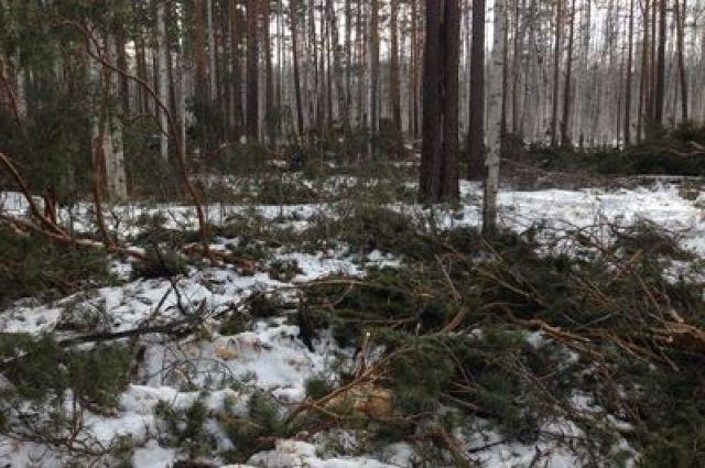 Уралец заплатит 1,3 млн руб. за незаконную вырубку леса