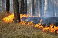 Пал травы может привести к крупному лесному пожару.