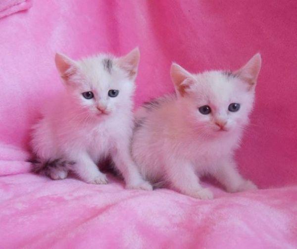 А у этих маленьких комочков имени пока нет. Малышкам 1,5 месяца, и они очень хотят обрести семью. Куратор Ева 8-927-533-82-10.