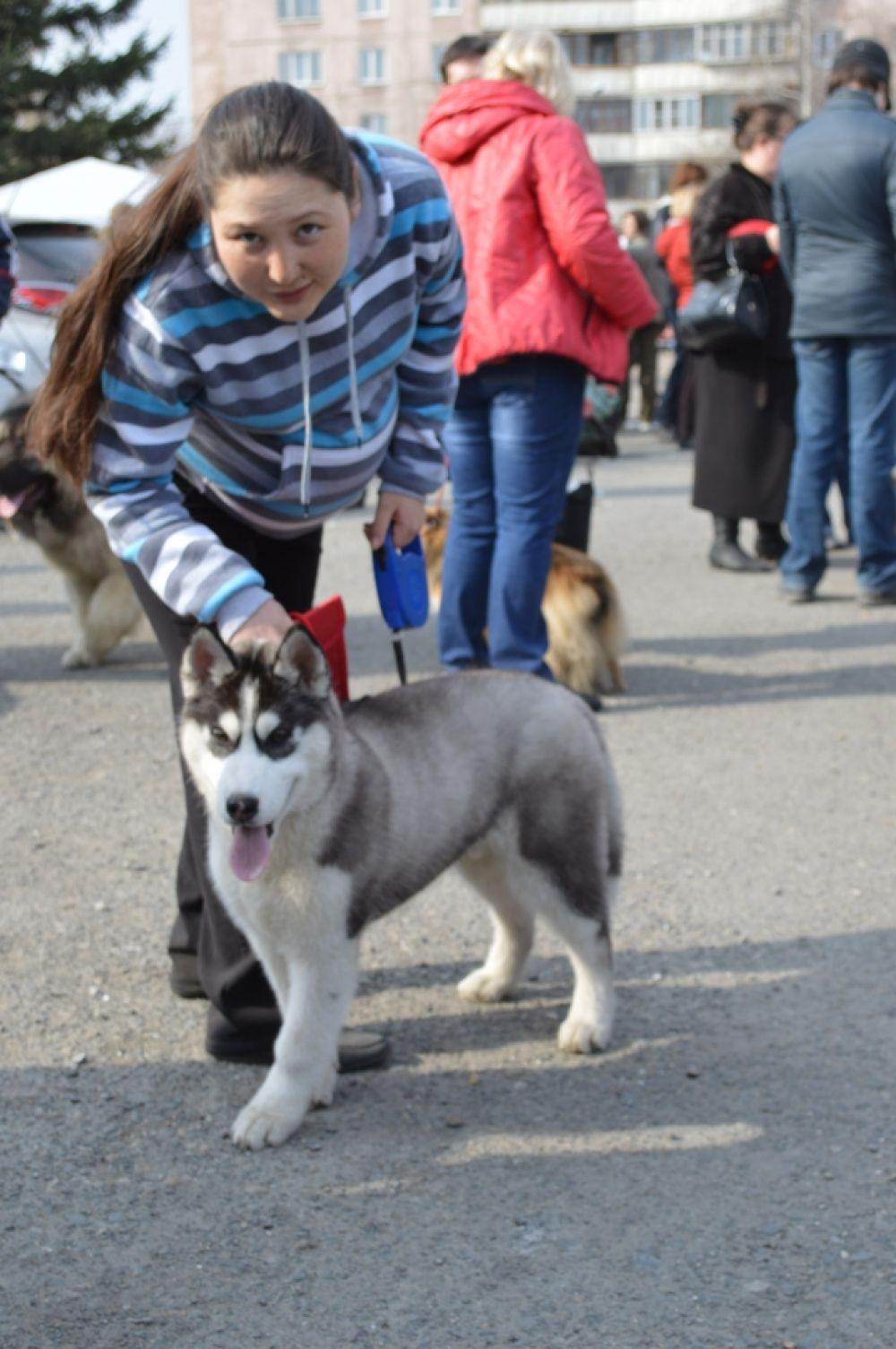 Демон - третья собака породы хаски, которую взяли на воспитание Андрей и Айана