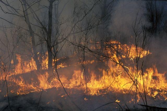 В 16 районах области установлен третий класс пожарной опасности.
