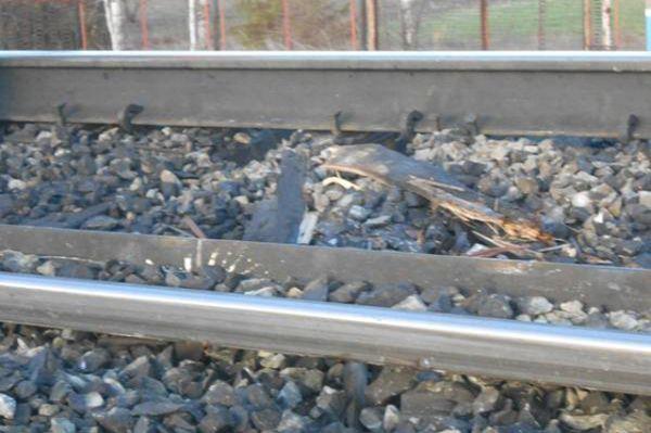 По данным спасателей, пострадавших нет. На аварийном участке железной дороги не проходят маршруты пассажирских поездов, поэтому задержек в следовании транспорта нет.