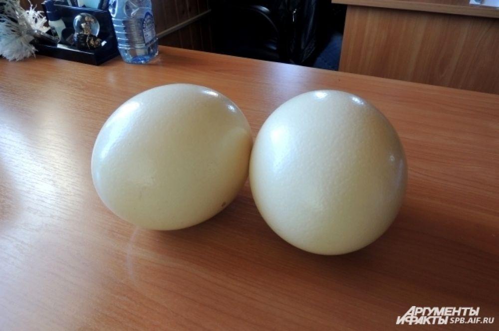 Страусиное яйцо больше куриного в 25 раз.