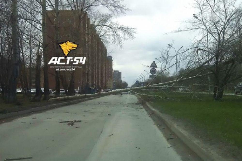 Поваленное дерево на улице Петухова.