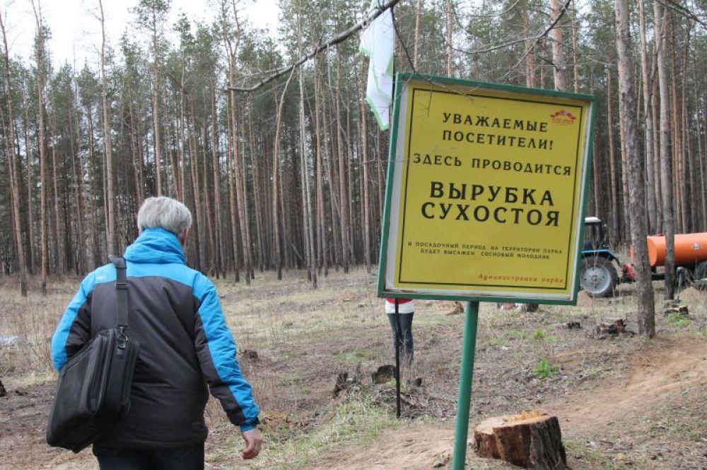 1.Деревья сажали на месте вырубленных