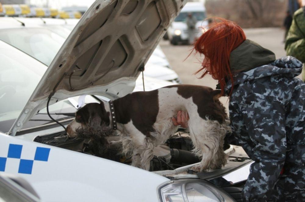 В ряде таможен, где в этом есть необходимость, служебные собаки обучены поиску оружия, боеприпасов, взрывчатых веществ и дериватов.