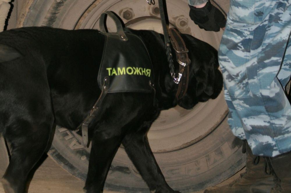 Связь с запахом у собаки вырабатывается через любимый игровой предмет. Обученная собака, почуяв запах наркотиков думает, что нашла любимую игрушку, и поэтому стремится поскорее найти, откуда именно исходит запах.