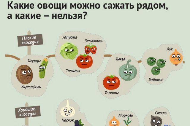 С чем можно сажать помидоры на одной грядке