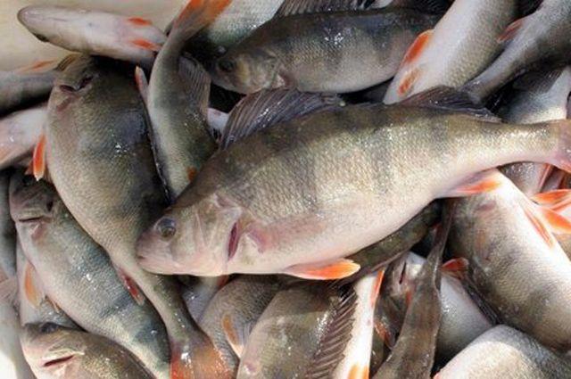 владимирский район где ловить рыбу