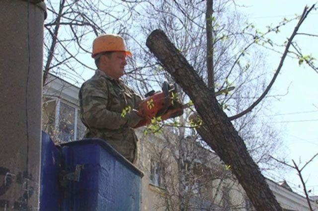 Формовочная обрезка деревьев помогает избавиться от горностаевой моли.