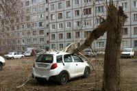 Из-за ветра деревья падали на машины.