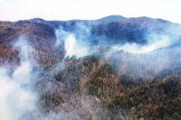 В Омской области горят леса.
