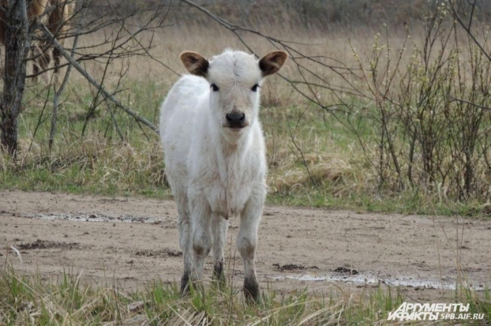 На ферме не убивают животных, а занимаются исключительно их разведением.