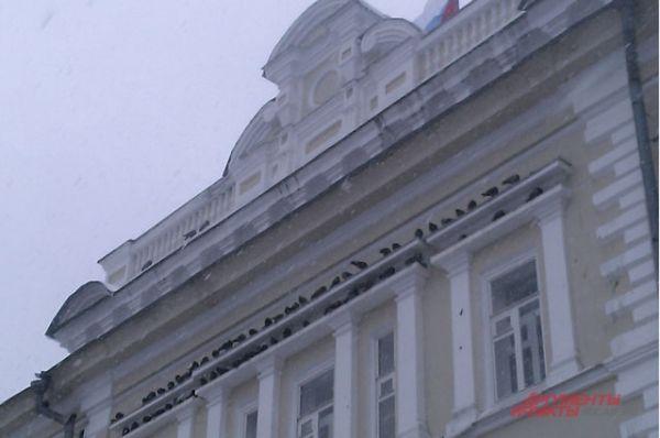 Голуби спрятались от снега на здании областного суда.