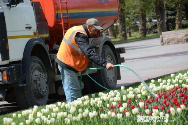 Городские коммунальные службы ухаживают за высаженными цветами.