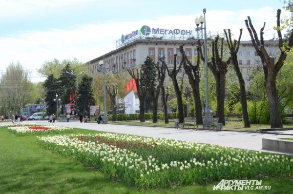 Центр Волгограда уже сложно представить без цветочных клумб.