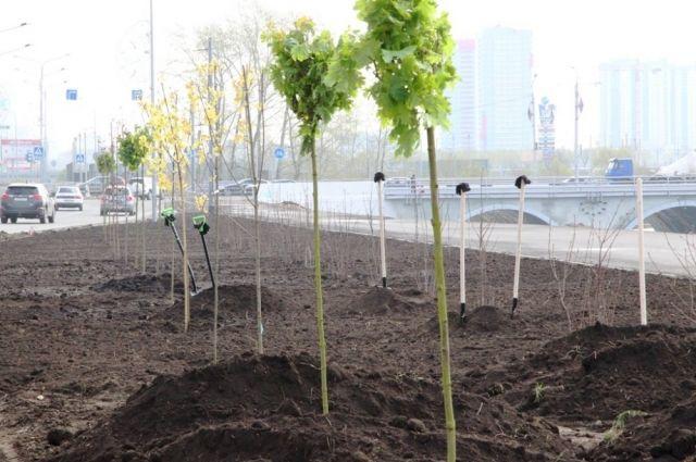 В Челябинске начался сезон озеленения территорий. Список адресов